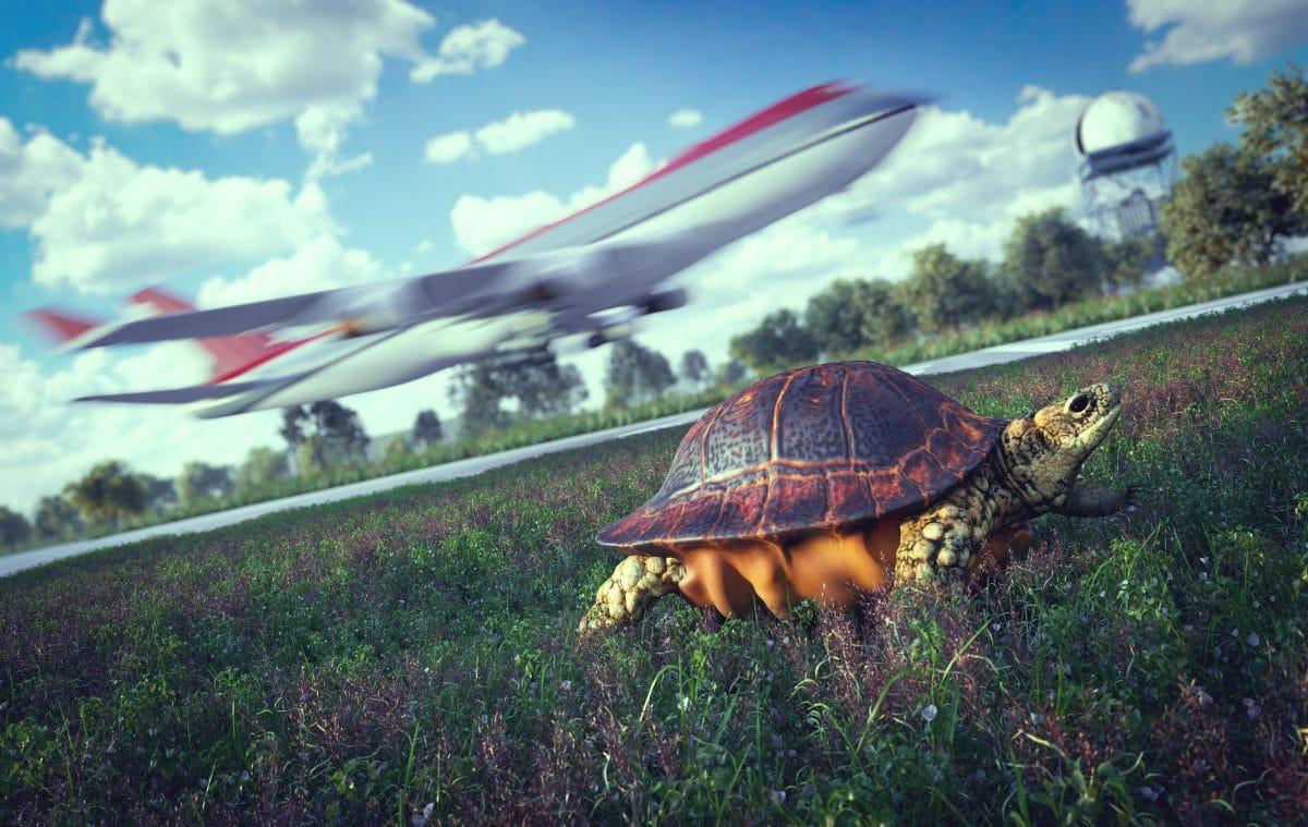 Schildkröte legt Flughafen nahe Tokio lahm