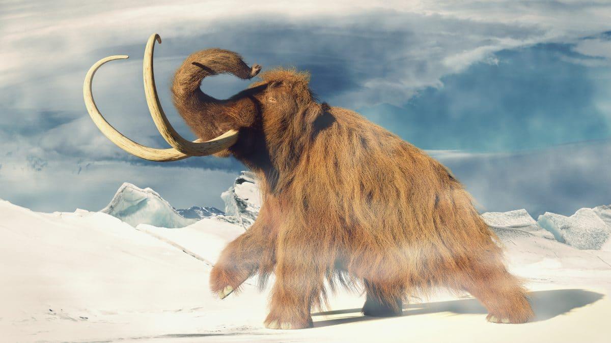Forscher will Mammuts wiederauferstehen lassen