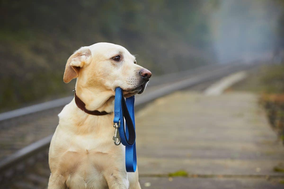 USA: Hund mit Leine absichtlich an Bahngleise gebunden