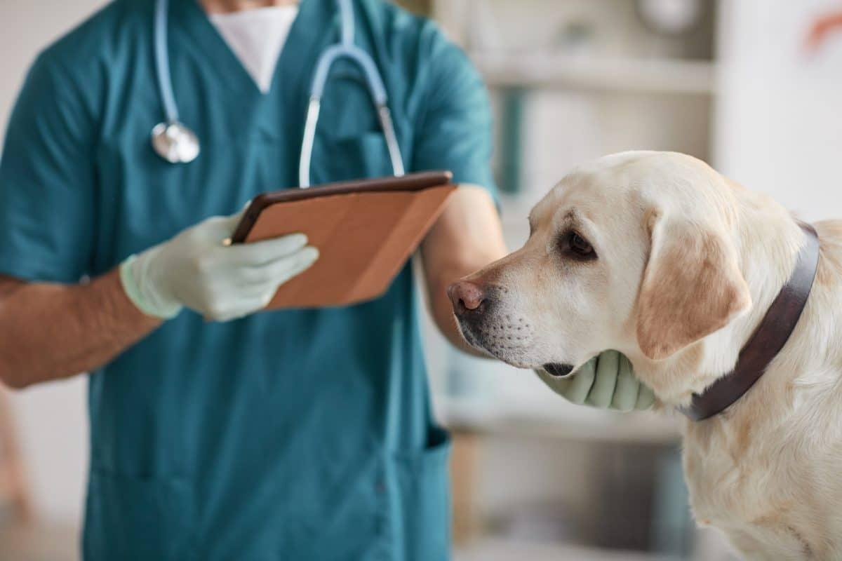 22 Jahre Haft: Tierarzt vergewaltigt Hunde und veröffentlicht Videos davon im Netz